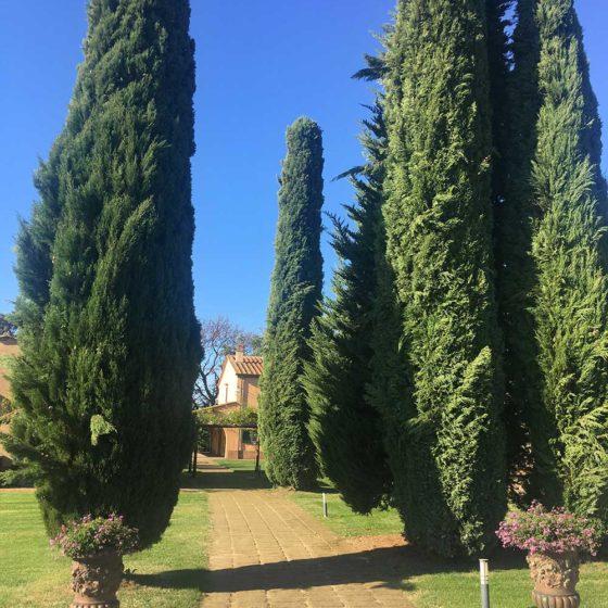 wine private tour tuscany